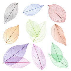 Collage of decorative skeleton leaves on white background.