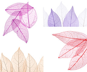 Papiers peints Squelette décoratif de lame Collage of decorative skeleton leaves on white background.