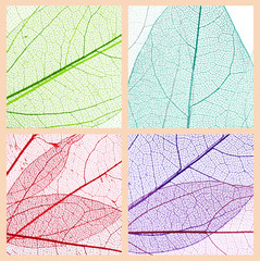 Collage of decorative skeleton leaves.