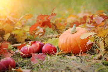 Orange pumpkin with red apples in autumn.