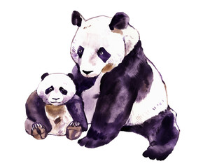 Panda watercolor. Panda bear and baby bear. Panda Bear watercolor illustration isolated on white background