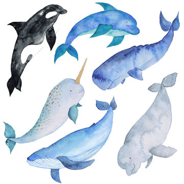 Whales Set  Watercolor hand-painted Illustration Sea animals Blue Whales Isolated Cute Kids