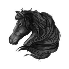 Black stallion horse head sketch
