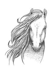 Sketch of wild mustang horse for equine design