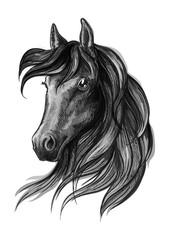 Horse head watercolor sketch portrait