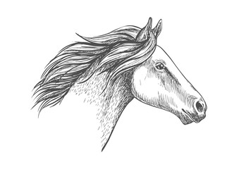 White horse pencil sketch portrait