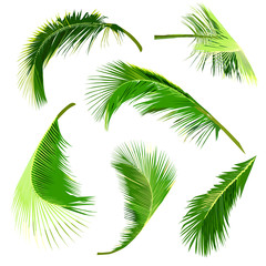 set of coconut tree leaves, collection of tropical leaves