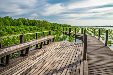 Long wood bridge in mangrove forest