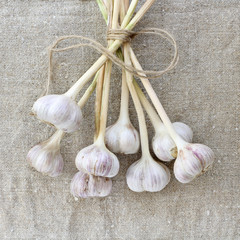 rustic garlic harvest/ flat layout of the garlic heads lying on the fabric top view