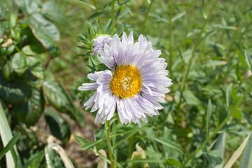 White flower in the garden