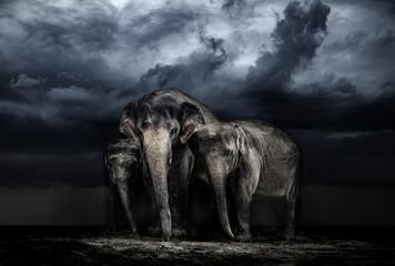 Elephant family. storm in the savannah