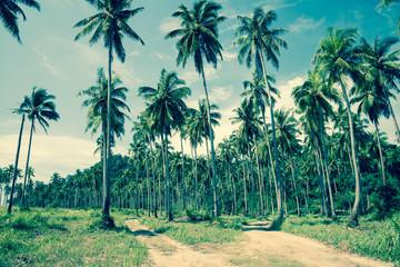 Coconut palm tree farm - color tone
