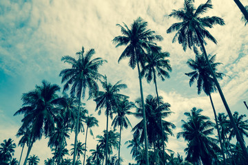 Coconut palm tree - summer holiday concept
