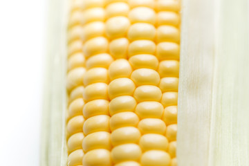Corn closeup isolated on white