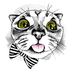 Portrait of a cat with bow. Vector illustration.