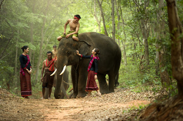 The mahout and the elephant at surin,Thailand