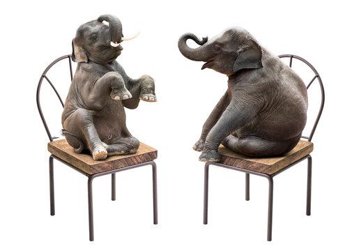 Elephant sitting on chair