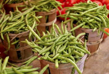 Bushels of Fresh Picked Green Beans