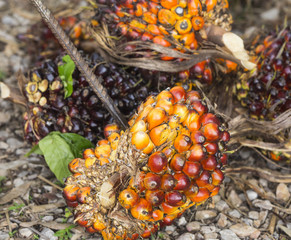A product is palm oil from plantation.