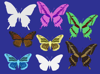 eight color butterflies isolated on blue