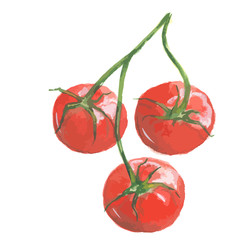 Isolated watercolor tomatoes. Fresh and healthy vegetable with vitamins. Farm vegetables.