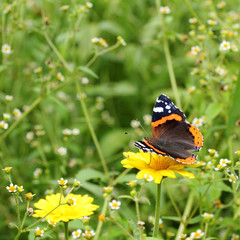 beautiful time of the year/ butterfly on a background summer landscape of flowering meadows