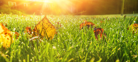 close up view of autumn leaves on grass