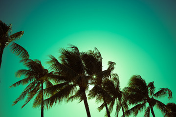 Palm trees blowing in the wind.