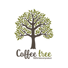 Hand drawn graphic coffee tree with green leaves. Vector illustration for labels, packs, logo design.