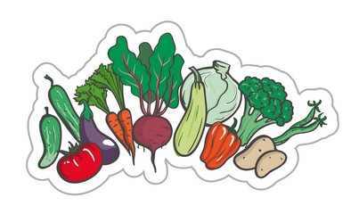 Vegetables. colored illustration on a white background