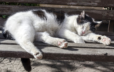 Cat sleeping on a bench