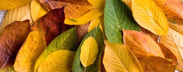 Autumn composition, wet colorful leaves. Studio shot.