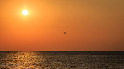 Dramatic sunrise with flying bird in the sky