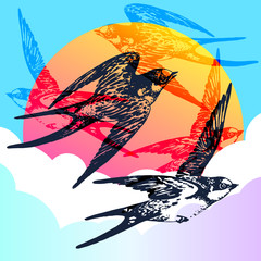 Vector hand drawn swallow bird set in the sky with clouds and sun. Flying pair of swifts in love - detailed sketch, beautiful animal in the wild with colorful background