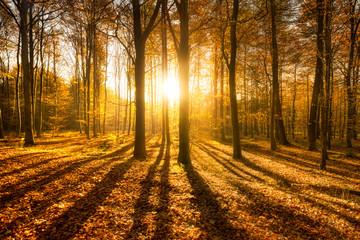 Wall Mural - Herbstwald bei Sonnenschein