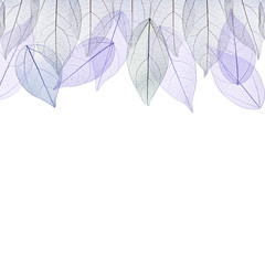 Wall Murals Decorative skeleton leaves Decorative skeleton leaves on white background. Space for text.