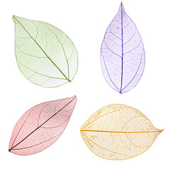 Tuinposter Decoratief nervenblad Collage of decorative skeleton leaves on white background.