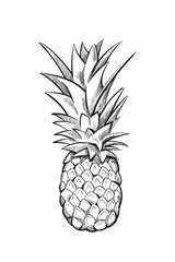 Hand drawn pineapple. Vector fruit