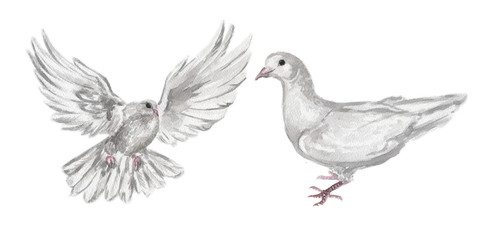 Watercolor dove set. White pigeon symbol of love , piece and freedom. Beautiful creaturesfor lovely art and decoration.