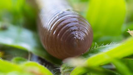 Earthworm Crawl