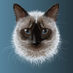Siamese cat, muzzle on a blue background,drawing
