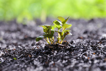 Green sapling , young plant showing ecology growth or nature concept