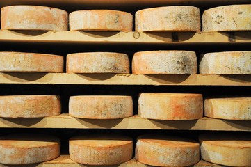 great and original forms of Fontina , typical Italian mountain c