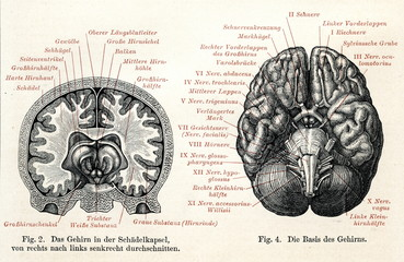 Human brain (from Meyers Lexikon, 1895, 7 vol.)