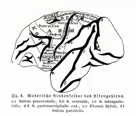Motor areas of the monkey brain (from Meyers Lexikon, 1895, 7 vol.)
