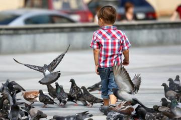 boy walks near the flocks of pigeons