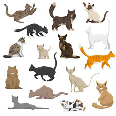 Domestic Cat Breeds Flat Icons Collection