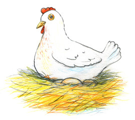 Illustration of a laying hen and her eggs on white background