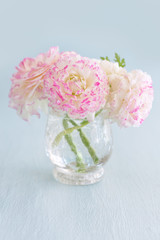 Pink ranunculus flowers close-up in a vase on a blue  background.