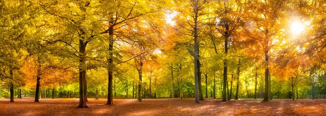 Herbst Wald Panorama im Sonnenschein